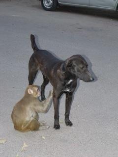 Don Perro y Don Mono, en Jor Bagh