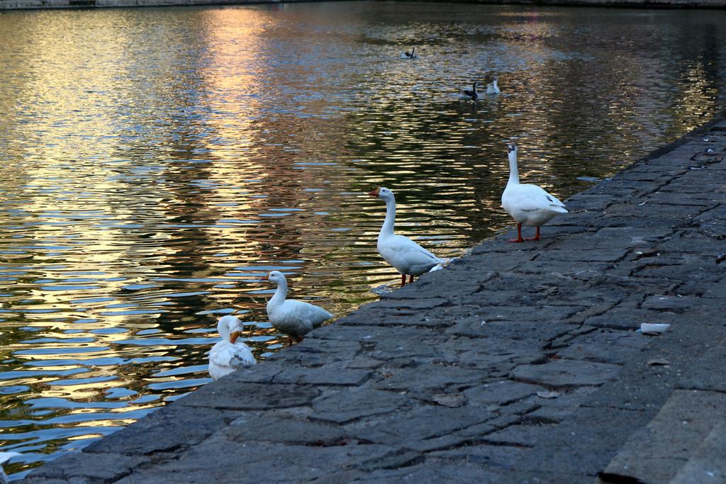 Banganga - Swan Lake