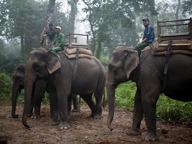 Elefantes en Chitwan