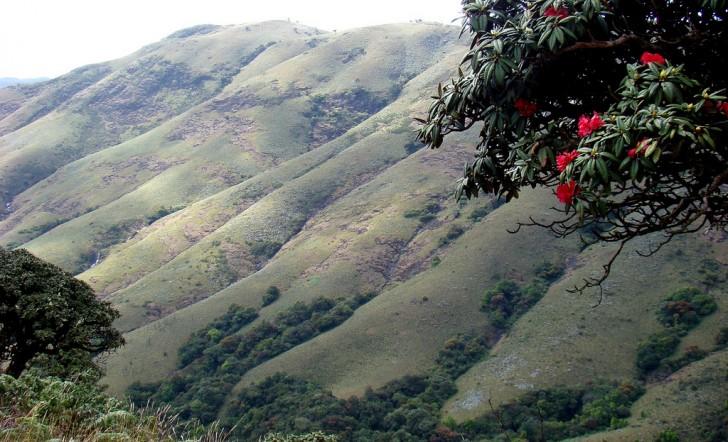 Parques Nacionales de India.