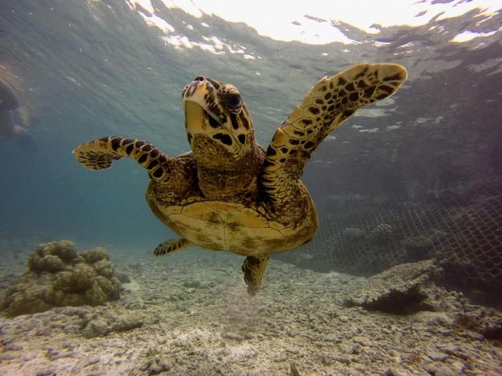 Submarinismo en Maldivas con Sociedad Geográfica de las Indias