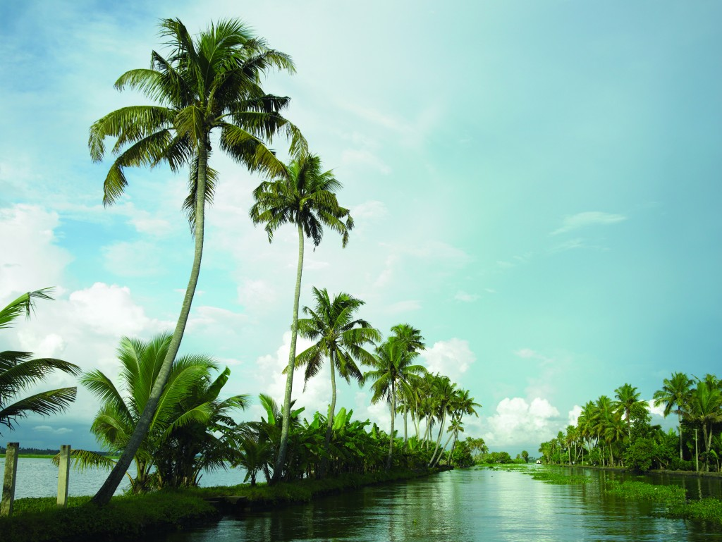 Browse the marshes of Kerala in India