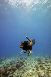 Diving in the Indian Ocean - Diving in Maldives