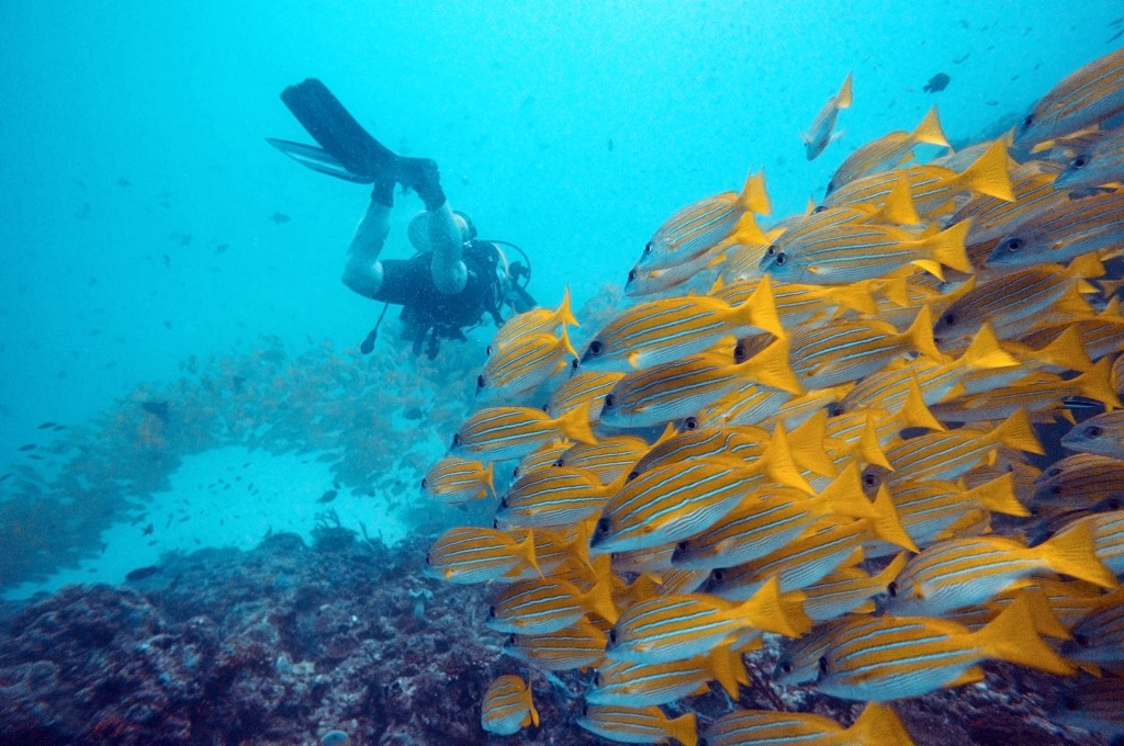 Diving in the Indian Ocean: Maldives