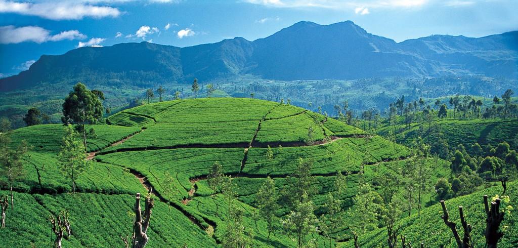 Montañas en Sri Lanka