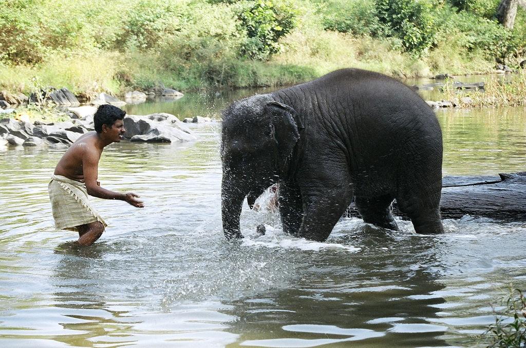 Elefantes en India - Cuidador jugando con elefante