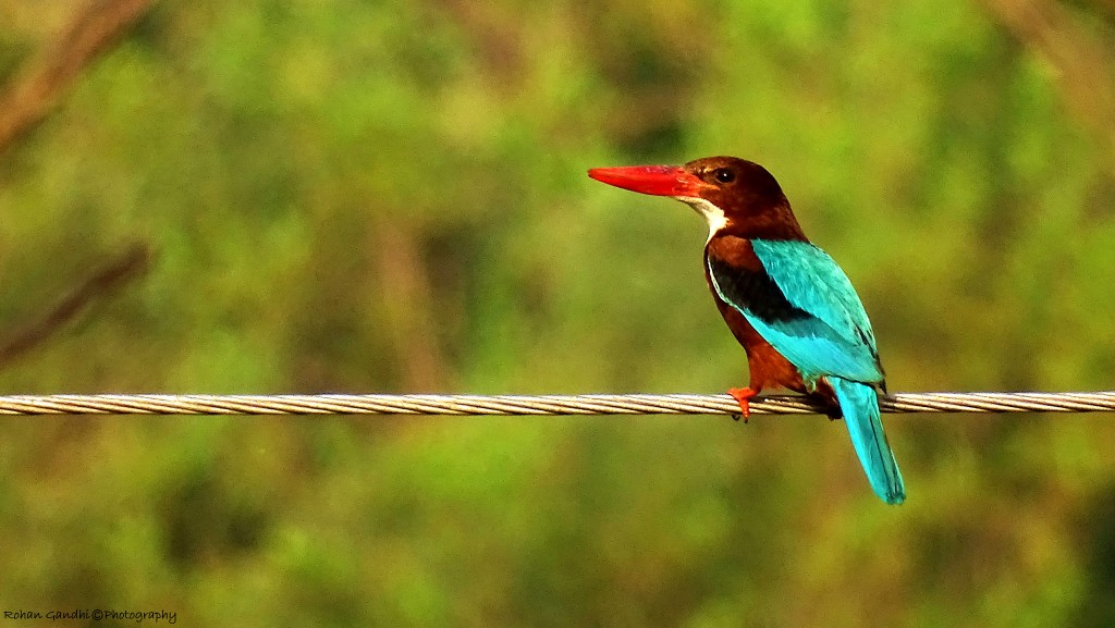 birdwatching in India