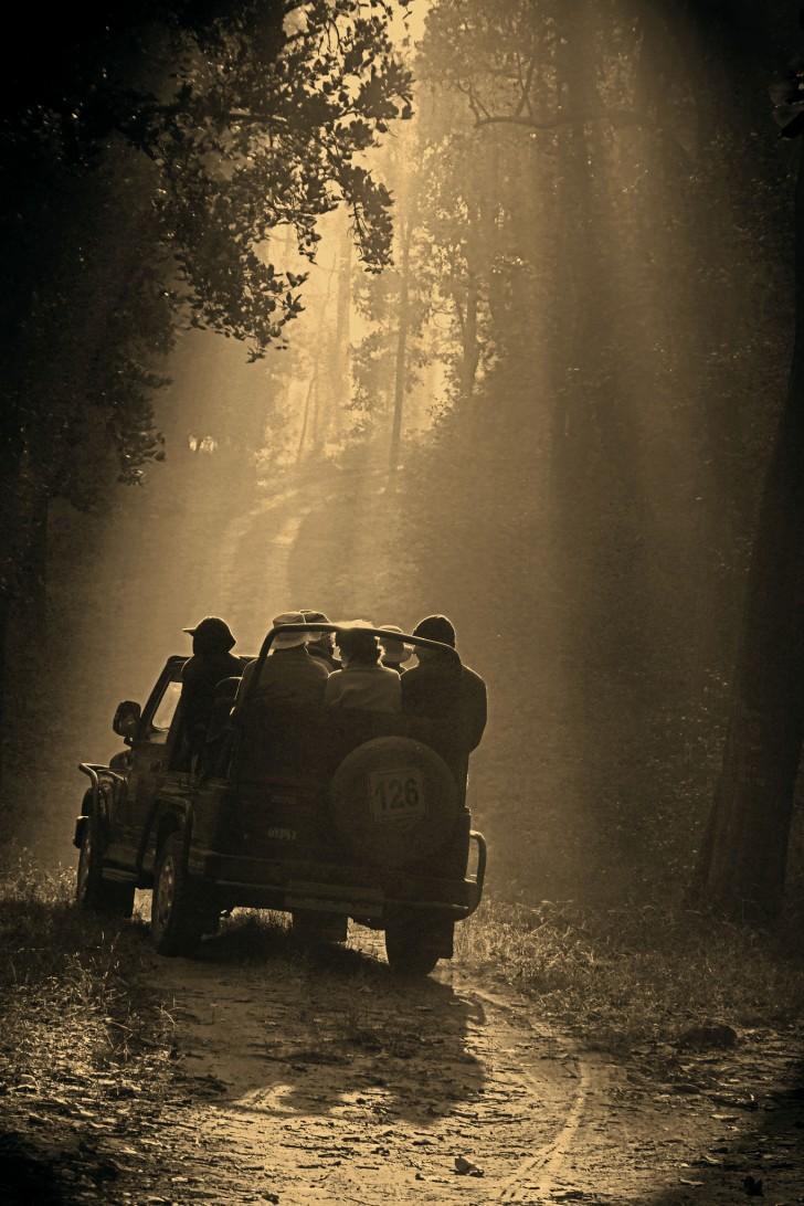 Viajes a la selva de Mowgli