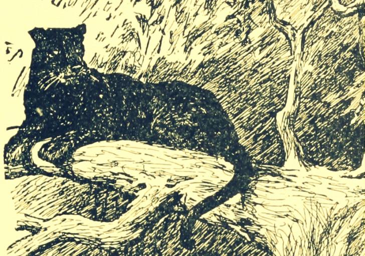 Ben Kingsley es Bagheera - Bagheera en ilustración -