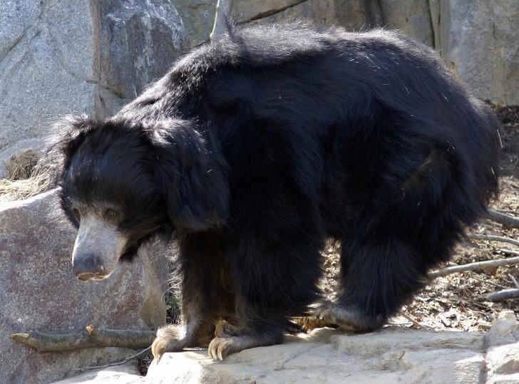Bill Murray es Baloo - Oso perezoso -