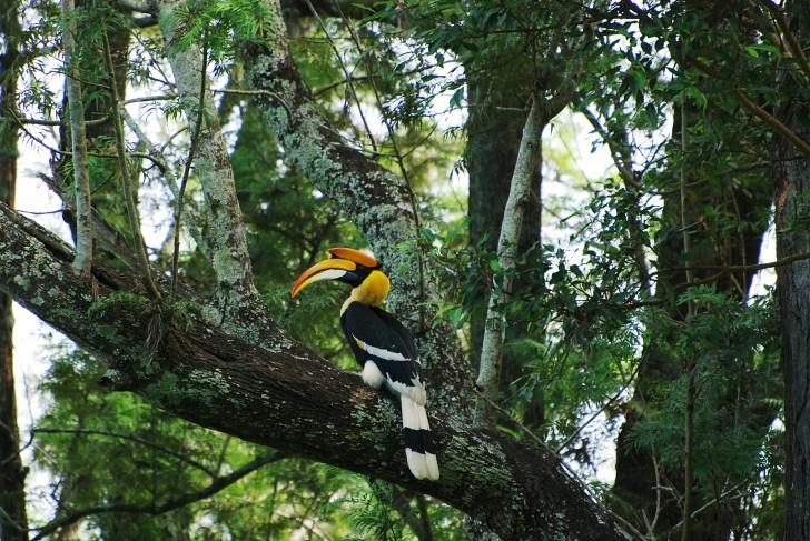 Ecoturismo en la India - Calao en Kerala