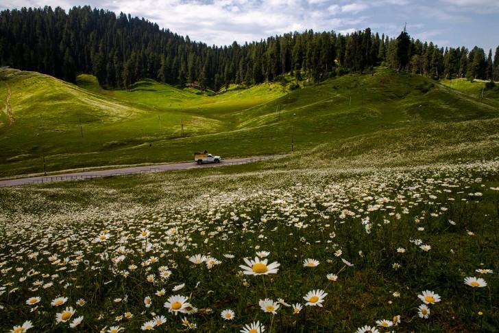 Ecoturismo en la India - Valley of the Flowers