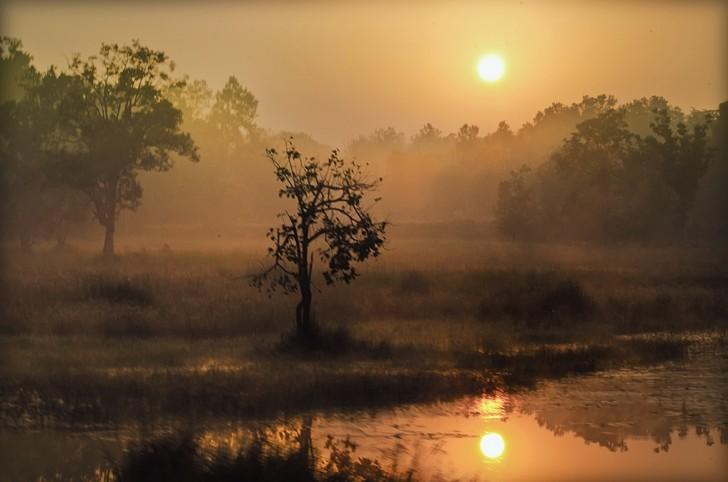 Viajes a la selva de Mowgli - Atardecer en Kanha - Meghdut Gorai
