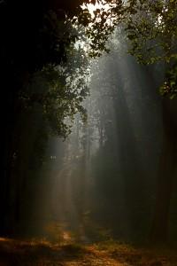 El Libro de la Selva Disney - Kanha