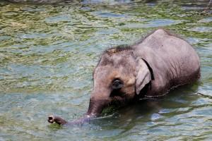 Viajar a Sri Lanka en Navidad. Cría de elefante en Yala