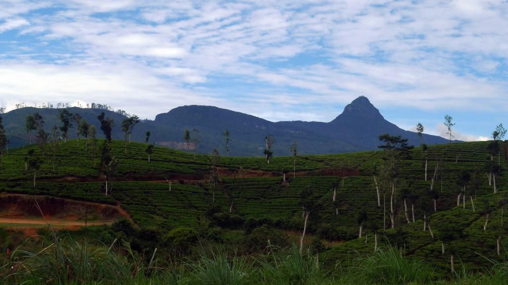 Viajar a Sri Lanka en Semana Santa. Pico de Adán