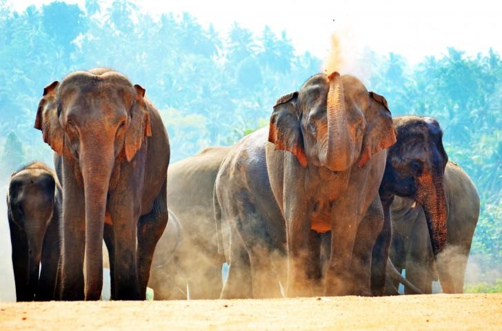 Viajar a Sri Lanka en verano. Elefantes al sol