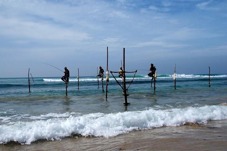 Viajar a Sri Lanka en verano. Pesca de zancos