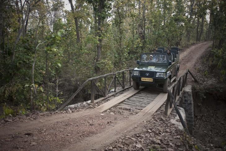 Viaje a la Selva - Safari en Jeep