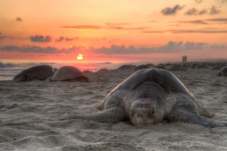 Tortugas en Sri Lanka - Tortugas al atardecer