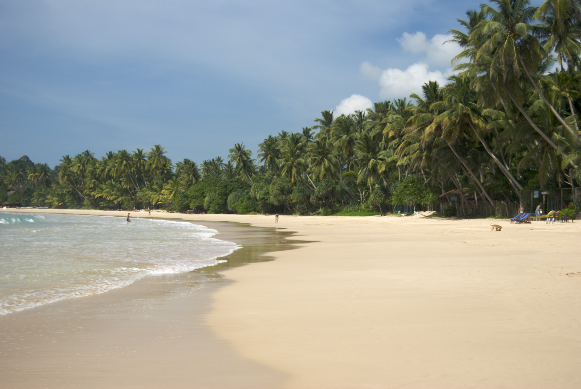 Viajar a Sri Lanka en enero - Mirissa Beach