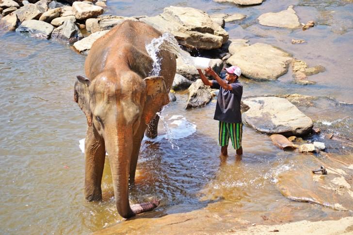 Viajar a Sri Lanka en febrero. Baño de los elefantes en el río Maha Oya