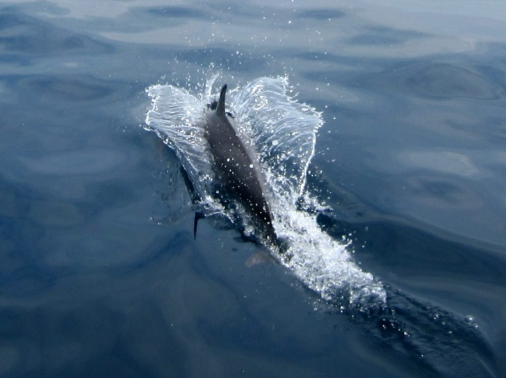 Viajar a Sri Lanka en abril - Delfines