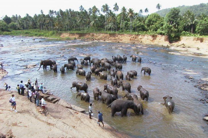 Viajar a Sri Lanka en julio - Encuentro de elefantes
