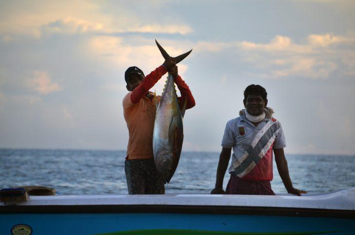 Viajar a Sri Lanka en mayo - Un gran pescado