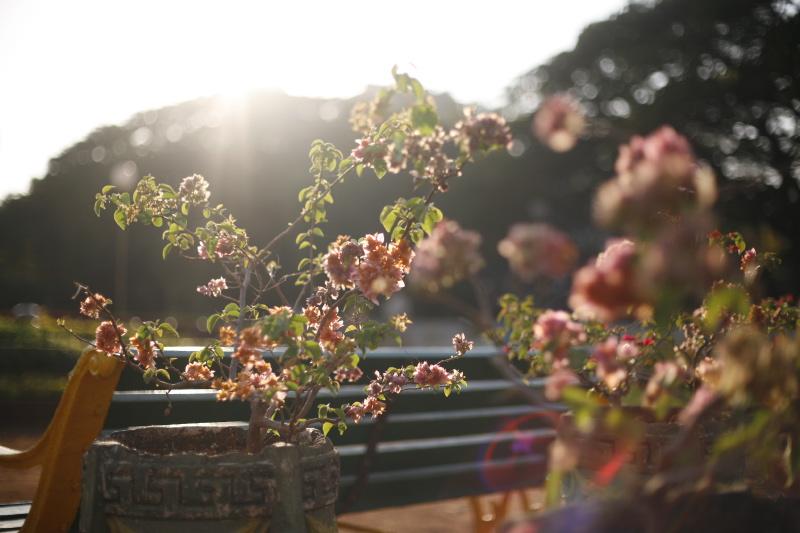 Botanical Gardens of India