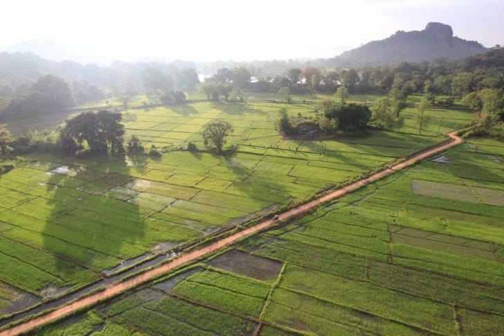 Viajar a Sri Lanka en octubre - Arrozales