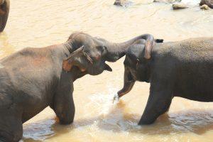 Viajar a Sri Lanka en diciembre - Baño de dos elefantes
