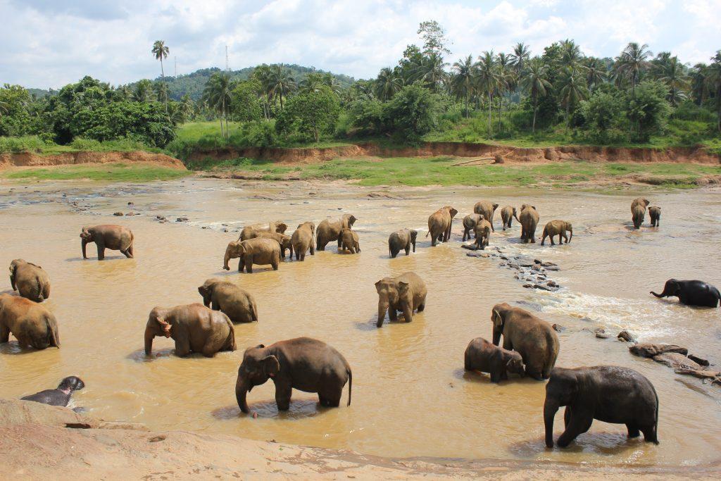 Orfanato de elefantes en Sri Lanka