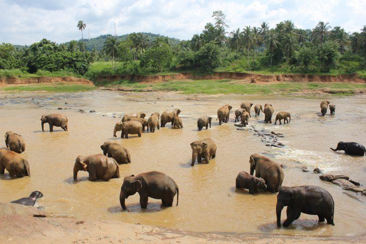 Viajar a Sri Lanka en noviembre - Baño de elefantes