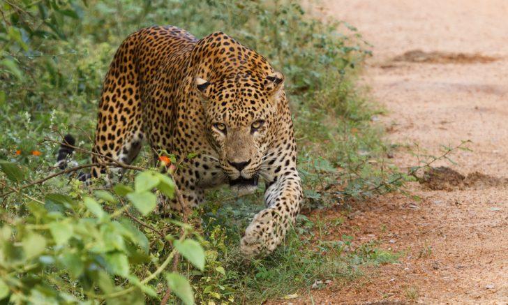 Top 5 de experiencias en Sri Lanka