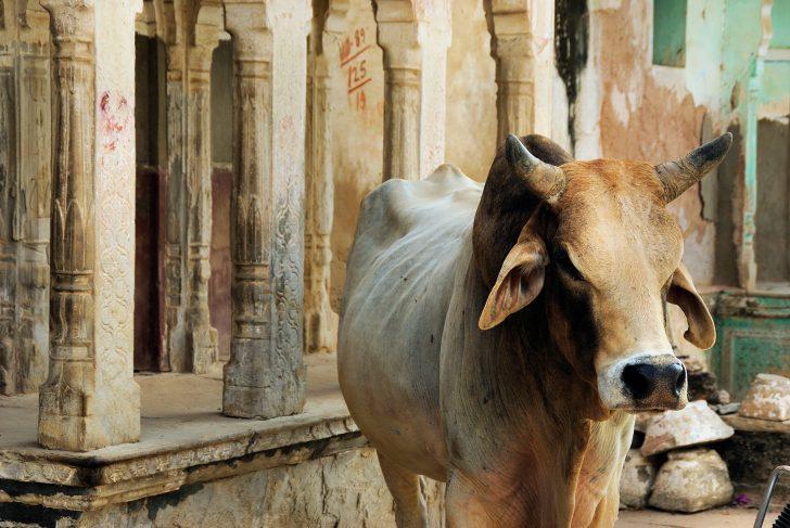 tradiciones curiosas de la India