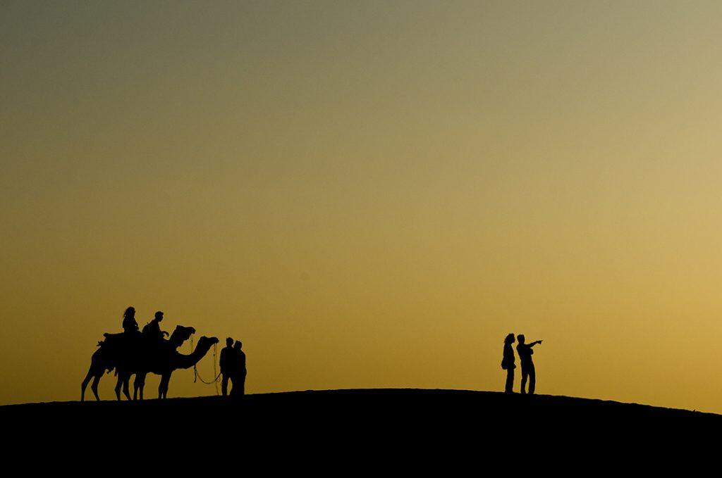 Ver Tigres de Bengala - Jaisalmer