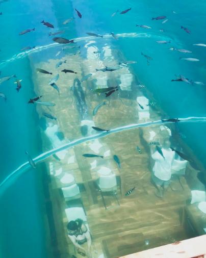 ithaa-el-primer-restaurante-submarino-del-mundo