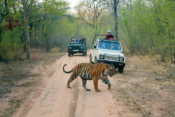 Ver tigres de Bengala