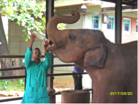 viajar-a-sri-lanka - Orfanato de elefantes en Sri Lanka