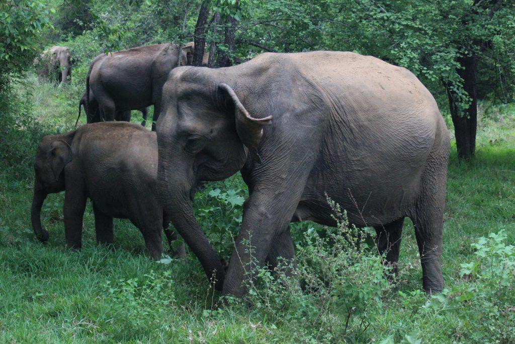 Parque Natural de Kaurula