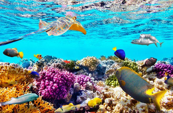 Bucear en Maldivas