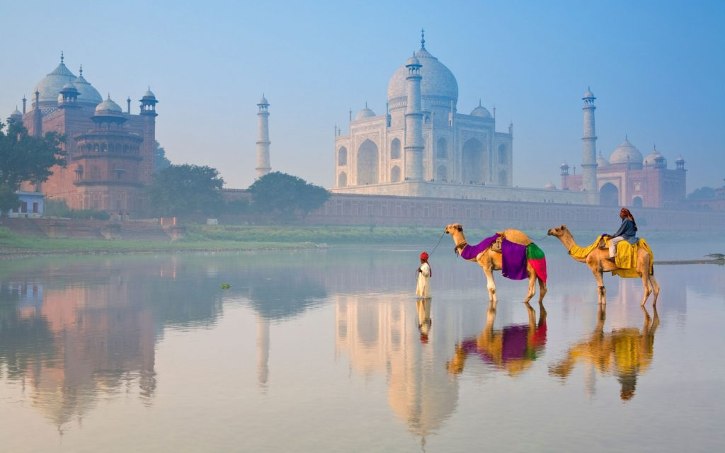 Camels and rider on the Yamuna river in front of the Taj Mahal