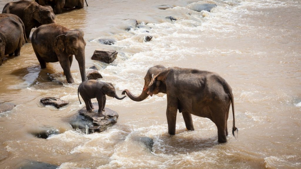 Una madre elefante con su bebe en una reserva de India