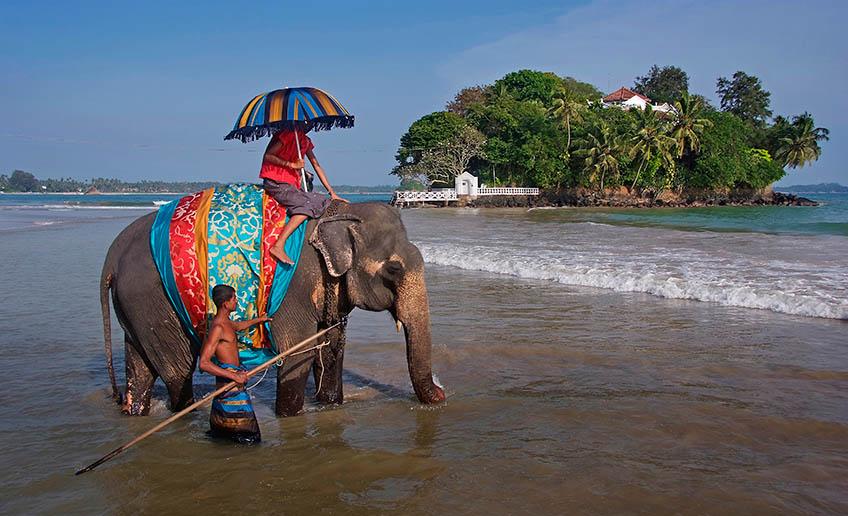 A la isla de Taprobane se puede acceder en elefante.