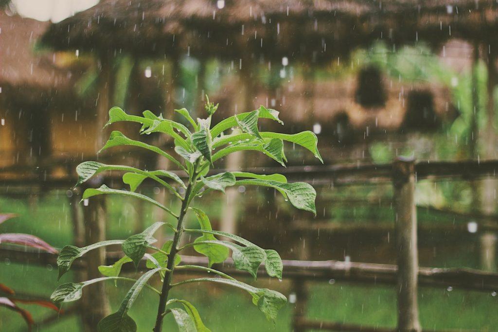Kerala, uno de los mejores lugares durante el monzón