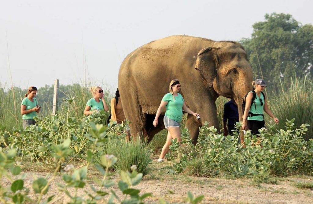 Voluntariado en Wildlife SOS, hogar de elefantes