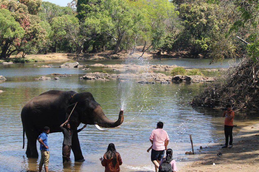 Elefante lanzando agua en el Dubare Elephant cAMP