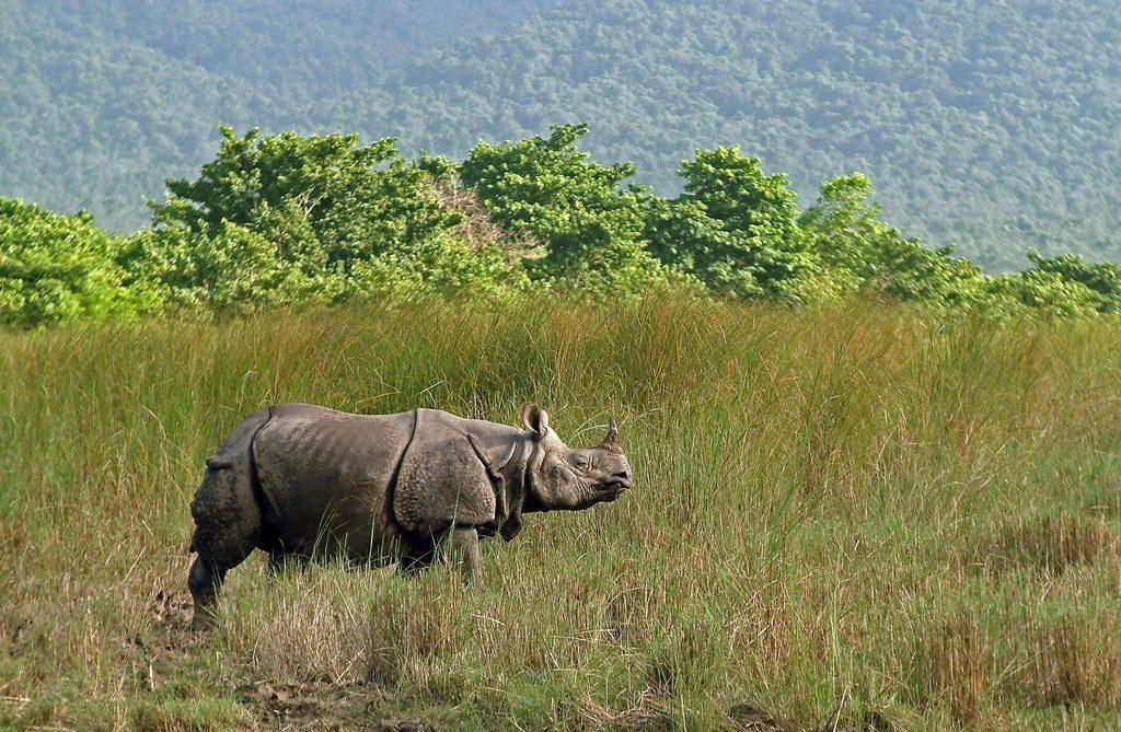 Rinoceronte en Parque Nacional Chitwan