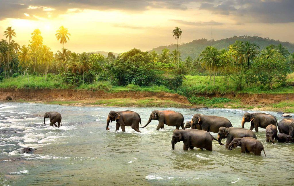 Visa gratis a Sri Lanka